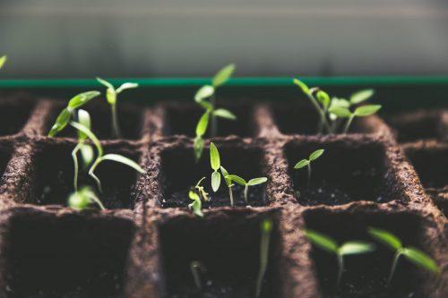 småbolagsfonder investerar i bolag med tillväxt